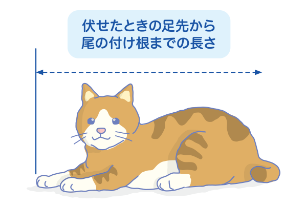 CatCaseTraining3.png