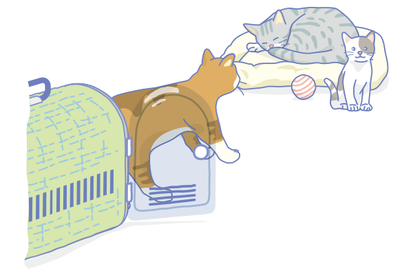 CatTraining1.png