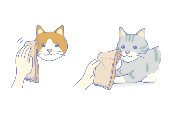 CatTraining3.png