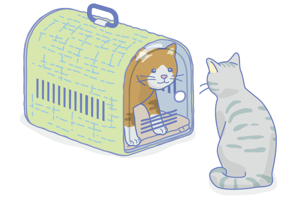 CatTraining4.png